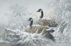 Larry Fanning Larry Fanning April Snow - Canada Geese (SN)