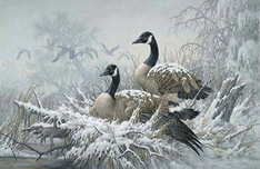 Larry Fanning Larry Fanning April Snow - Canada Geese (AP)