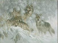 Larry Fanning Larry Fanning Crystal Morning - Gray Wolves (AP)