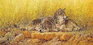 Larry Fanning Larry Fanning End of Summer - Gray Wolves (Canvas AP)