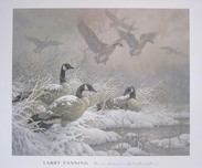 Larry Fanning Larry Fanning Winter Retreat - Canada Geese (Poster)