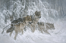 Larry Fanning Larry Fanning Edge of Winter - Gray Wolves (AP)