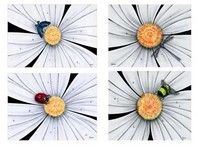Michael Godard Art & Prints Michael Godard Art & Prints White Daisy Flower Series II - Set of Four