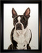Jacquie Vaux Original Water Color Boston Terrier