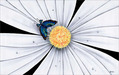 Michael Godard Limited Edition Fine Art Limited Edition Giclee on Canvas Butterfly, White Daisy Flower (AP)