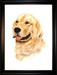 Jacquie Vaux Original Water Color Golden Retriever