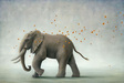 Robert Bissell Limited Edition Giclee on Canvas Hero I - Elephant (27 X 40)