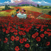 James Coleman Limited Edition Giclee on Canvas Red Poppies