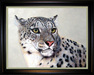Jacquie Vaux Original Water Color Snow Leopard