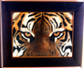 Jacquie Vaux Original Water Color Eyes of a Tiger