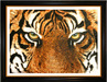Jacquie Vaux Original Water Color Tiger Eyes