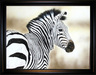 Jacquie Vaux Original Water Color Zebra
