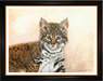 Jacquie Vaux Original Water Color Baby Bobcat II