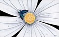 Michael Godard Limited Edition Fine Art Limited Edition Giclee on Canvas Butterfly, White Daisy Flower (SN)