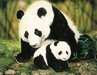Jacquie Vaux Limited Edition Fine Art Giclee Mother and Baby Panda