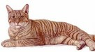 Jacquie Vaux Limited Edition Canvas Transfer Orange Tabby