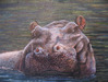 Jacquie Vaux Original Water Color Hippo Original Watercolor