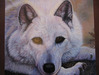 Jacquie Vaux Original Water Color White Wolf Original Watercolor