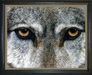 Jacquie Vaux Original Water Color Wolf Eyes II